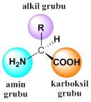 proteinlerin-yapi-tasi-aminoasitler-1