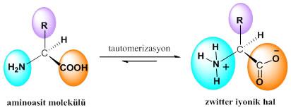 proteinlerin-yapi-tasi-aminoasitler-2