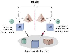 proteinlerin-yapi-tasi-aminoasitler-5