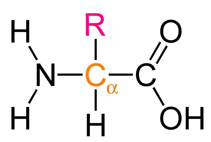 proteinlerin-yapi-tasi-aminoasitler