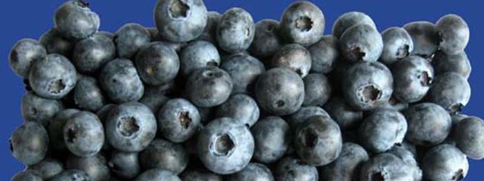 ilac-gibi-meyve-aroniya