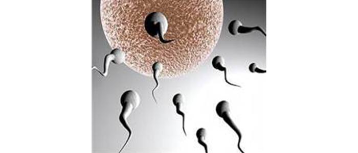 plastik-sperm-sayisini-azaltiyor