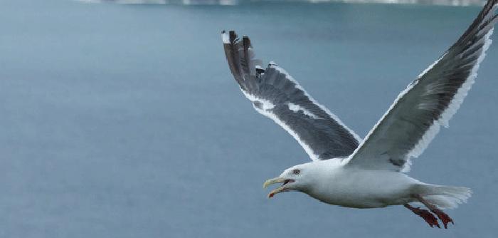 plastikler deniz kuslarini etkiliyor - Plastikler deniz kuşlarını etkiliyor