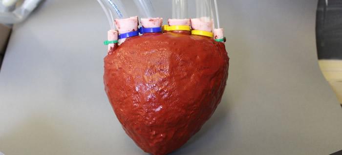 bilim-insanlari-polimerden-kalp-yapti