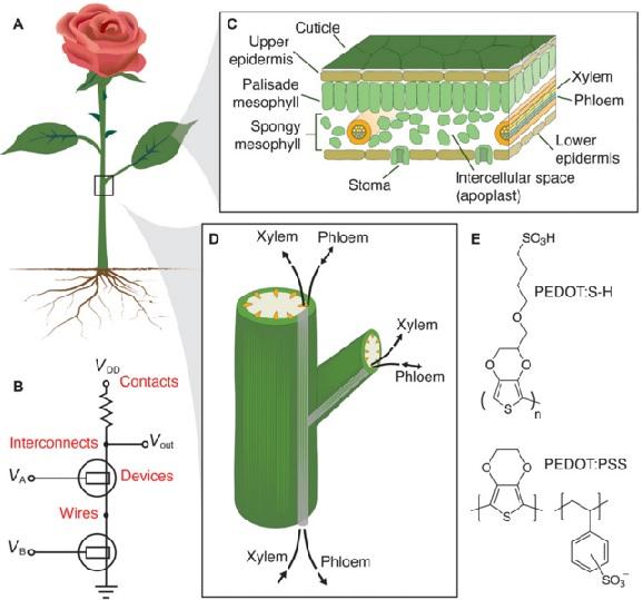 dunyanin-ilk-elektronik-bitkisini-yaptilar-1