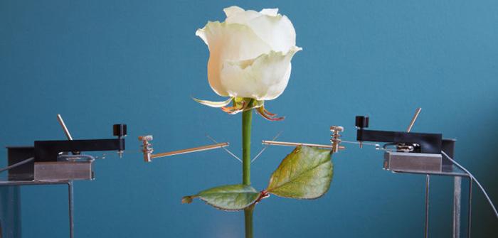 dunyanin-ilk-elektronik-bitkisini-yaptilar