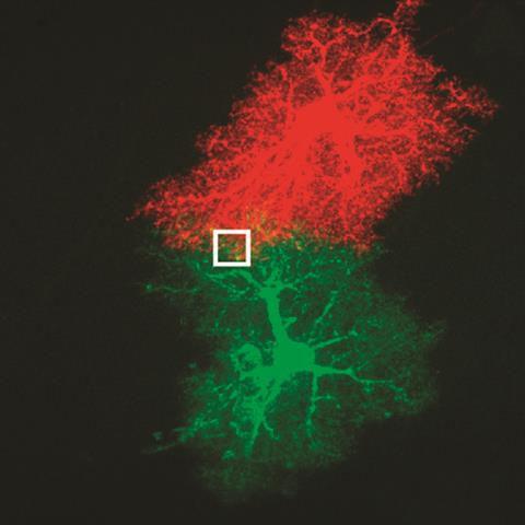 hucreler-elektron-mikroskobuyla-ilk-kez-renkli-olarak-goruntulendi-1