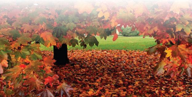 sonbahar-yapraklarindaki-endustri-icin-yararli-ham-maddeler-ve-dogal-pigmentler