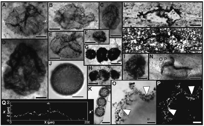 dunya-da-oksijenin-olusumundan-once-yasamis-bir-bakteri-fosili-bulundu-3