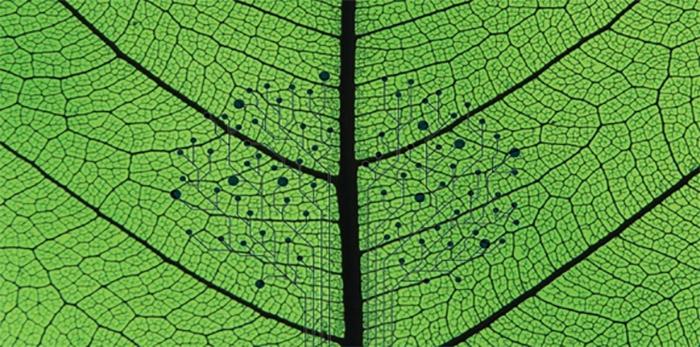 yapay-yaprak-iklim-degisikligiyle-mucadele-etmek-icin-filizlenecek-mi