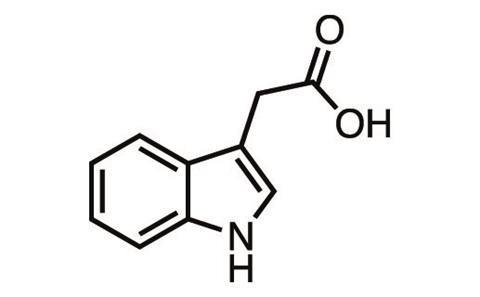 sonbaharin kimyasi 1 - Sonbaharın Kimyası