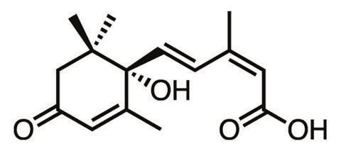 sonbaharin kimyasi 2 - Sonbaharın Kimyası