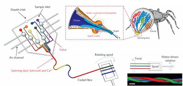 yapay orumcek agi uretiminde inovatif surec gelistirildi - Yapay örümcek ağı üretiminde inovatif süreç geliştirildi!