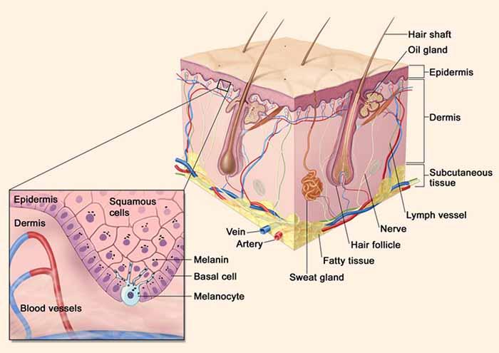 yeni ilac melanom yayilmasini yuzde 90 oraninda azaltiyor - Yeni İlaç Melanom Yayılmasını Yüzde 90 Oranında Azaltıyor
