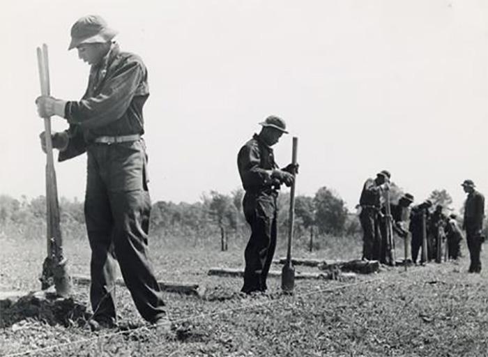 roosevelt agac ordusu zehirlenmesi - Roosevelt Ağaç Ordusu Zehirlenmesi