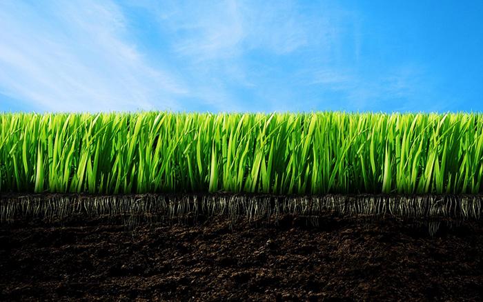 bilim adamlari cimden benzin uretti - Bilim adamları çimden benzin üretti