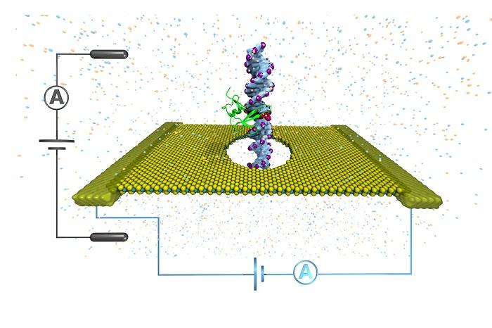 kanserin erken teshisinde nano gozenekli yapilarin rolu dna metilasyonu - Kanserin Erken Teşhisinde Nano gözenekli Yapıların Rolü: DNA Metilasyonu