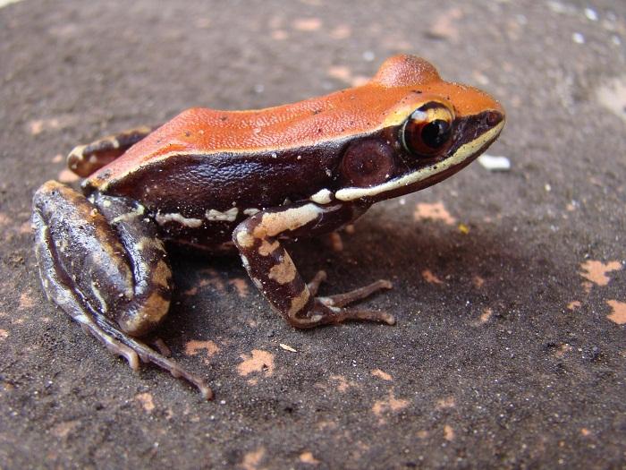 kurbagalarin yardimi ile grip virusleri ortadan kalkiyor - Kurbağaların Yardımı ile Grip Virüsleri Ortadan Kalkıyor