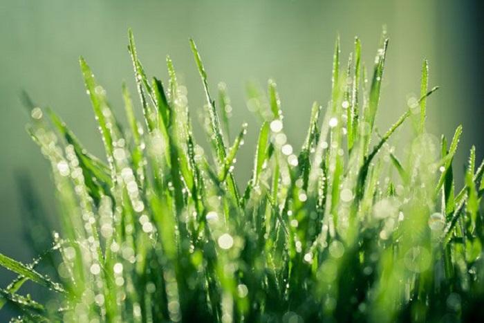 neden cimleriniz yagmur yagdıktan sonra daha yesil gorunur - Neden Yağmur Yağdıktan Sonra Çimleriniz Daha Yeşil Görünür?