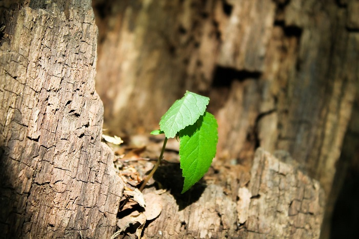 sentetik fotosentez yeni teknikler karbondioksiti bitkilerden daha hizli geri donduruyor - Sentetik Fotosentez? Yeni Teknikler Karbondioksiti Bitkilerden Daha Hızlı Geri Döndürüyor