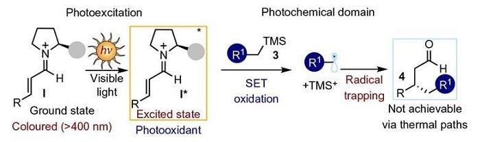 yeni organik katalizorler omurgalilarin gorme mekanizmasini taklit ediyor 1 - Yeni Organik Katalizörler Omurgalıların Görme Mekanizmasını Taklit Ediyor