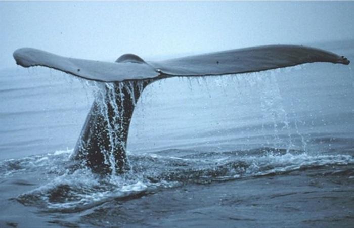 Karbonu Atmosferin Dışında Tutan Balinalar