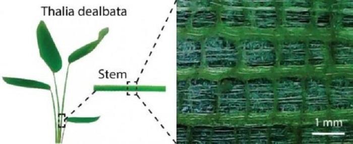 Bitki Gövdesinden Esinlenen Esnek Elektronikler