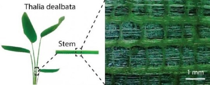 bitki govdesinden esinlenen esnek elektronikler - Bitki Gövdesinden Esinlenen Esnek Elektronikler