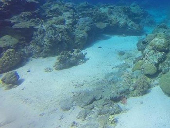 Deniz Tabanındaki Abiyotik Organik Moleküller Nasıl Oluşur?