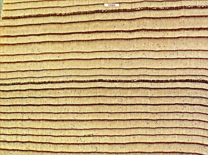 Odunun Adli Kimyasal Analizi Yasadışı Tomrukçuluk İle Mücadeleyi Kuvvetlendirebilir