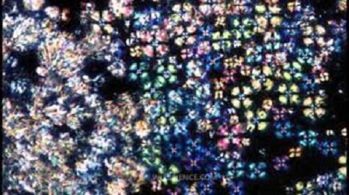 Sıvı-Kristal ve Bakteriyel Maddeler Kendi Kendini Organize Ediyor ve Birlikte Hareket Ediyor