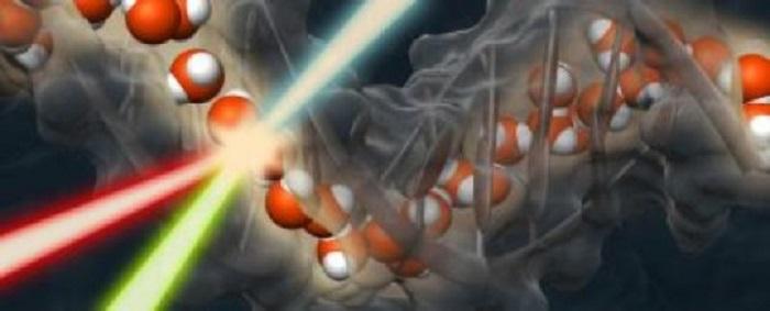 Su, DNA'nın Etrafında 'Hidrasyon Omurgası' Oluşturur