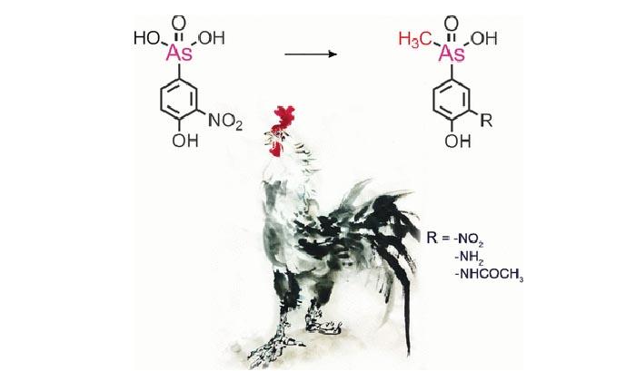 tavuk karacigerlerinde metillendirilmis fenilarsenikli bilesikler - Tavuk Karaciğerlerinde Metillendirilmiş Fenilarsenikli Bileşikler
