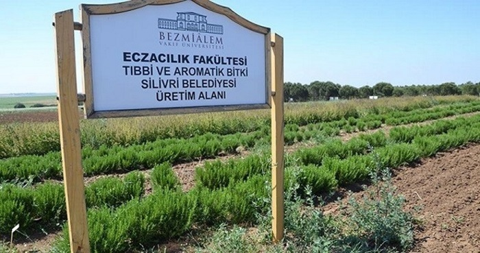 turkiye ilk kez ilac sanayisi icin bitki yetistiriyor - Türkiye İlk Kez İlaç Sanayisi için Bitki Yetiştiriyor