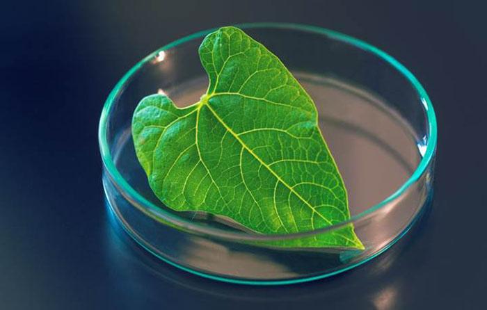 yapay fotosentez ile gunes isinlarindan hidrojen yakit elde edildi 1 - Yapay Fotosentez ile Güneş Işınlarından Hidrojen Yakıt Elde Edildi