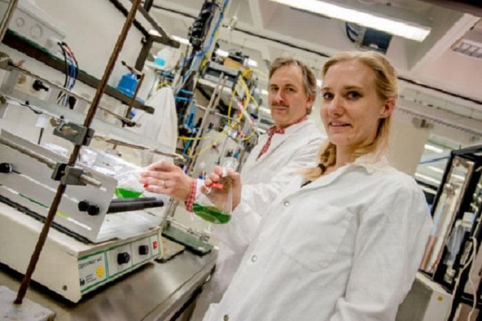 bakteriyel enzimin yesil alglerdeki seruveni - Bakteriyel Enzimin Yeşil Alglerdeki Serüveni