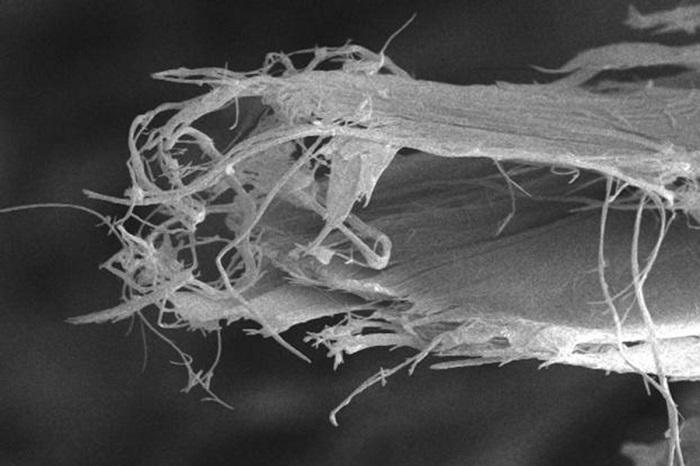 beyaz asbestin listelenmesi ust duzey ihracatcilar tarafindan engellendi - Beyaz Asbestin Listelenmesi Üst Düzey İhracatçılar Tarafından Engellendi