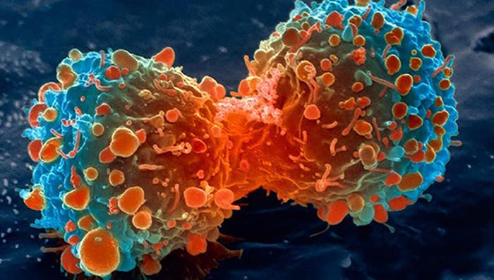 Büyük Sır : Kanser Tedavisindeki Gizemli Molekül