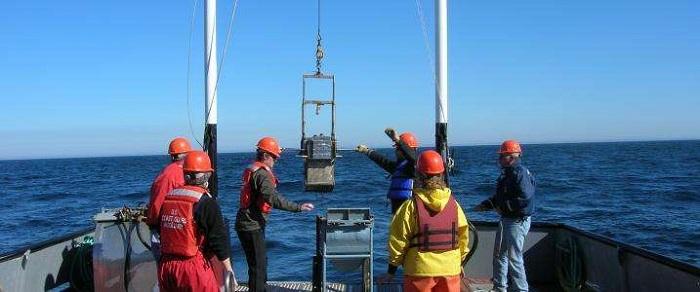 Deniz Hayvanları Yenilenebilir Enerji için Araştırılıyor