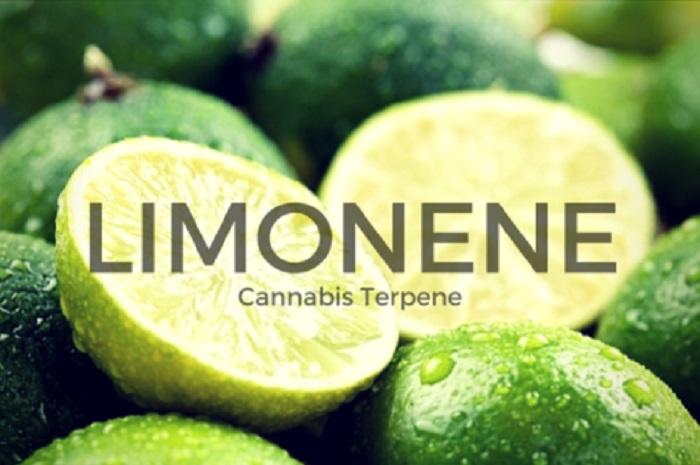 hayat-size-limon-verirse-biyoplastik-yapin
