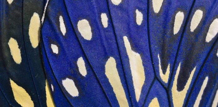 Bilim Adamları Yeni Renkleri Nasıl Keşfediyorlar?