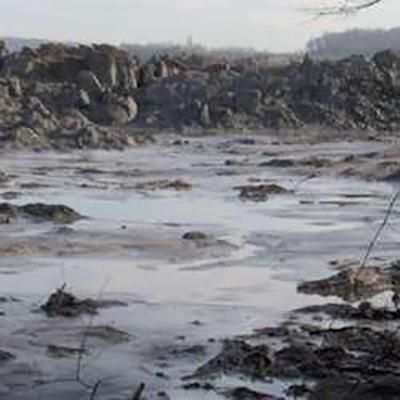 Genetiği Değiştirilmiş Maya Ağır Metal Kirliliğini Yok Ediyor