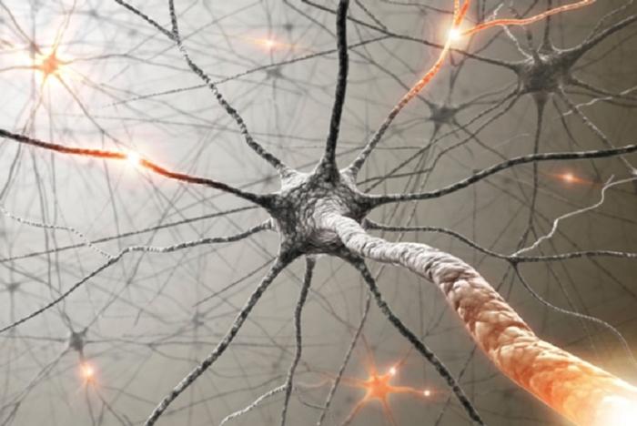 insan beynini kandirma laboratuvar yapimi yapay zeka sinapslar - İnsan Beynini Kandırma: Laboratuvar Yapımı Yapay Zeka Sinapslar
