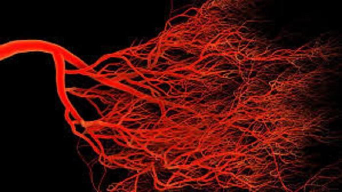 3D-Baskı Kan Damarları İlaç Testinde