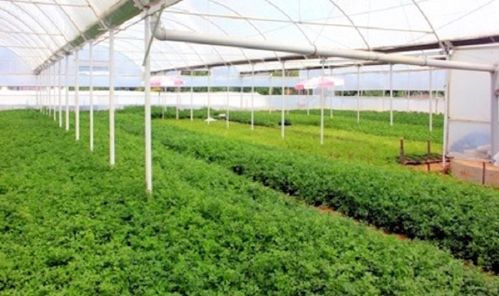 Bayer, Nitrojen Bazlı Gübre Kullanımını Azaltmak için Biyolojik Çözümler Geliştirecek