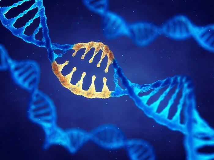 Sentetik Genler Sadece Bir Tık Uzaklıkta