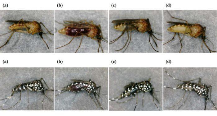 sivrisineklerden insan dnasina yolculuk - Sivrisineklerden İnsan DNA'sına Yolculuk