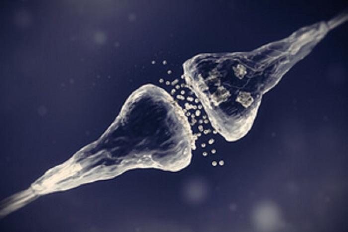 Yeni Organik Yapay Sinapslar, Beyin-Benzeri Bilgisayarların Sahip Olmadığı Biyolojik Boşlukları Köprülüyor