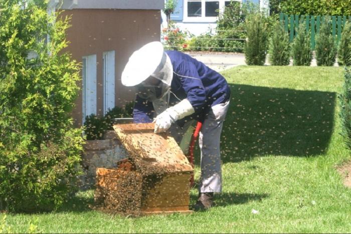 bal arilari antibiyotige direnc gosteren bakterilerle savasabilir - Bal Arıları Antibiyotiğe Direnç Gösteren Bakterilerle Savaşabilir