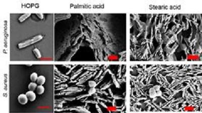 bocek kanatlari antibakteriyel kaplamalara ilham veriyor 3 - Böcek Kanatları Antibakteriyel Kaplamalara İlham Veriyor